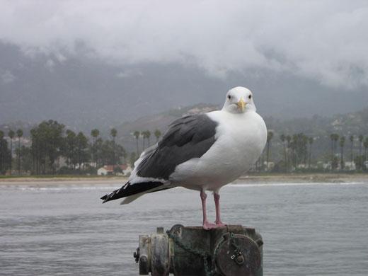sea-gull2.jpg